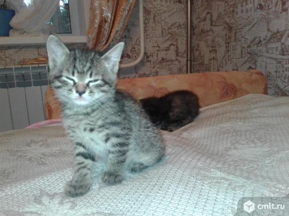 Подарю красивых котят. Фото 5.
