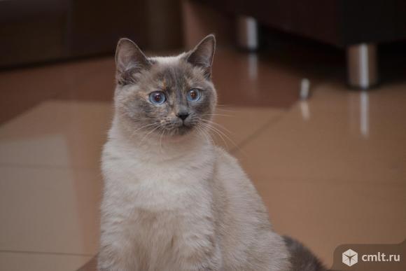 Кошечка Аиша в добрые руки. Фото 1.
