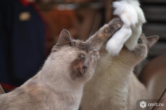 Кошечка Аиша в добрые руки. Фото 3.