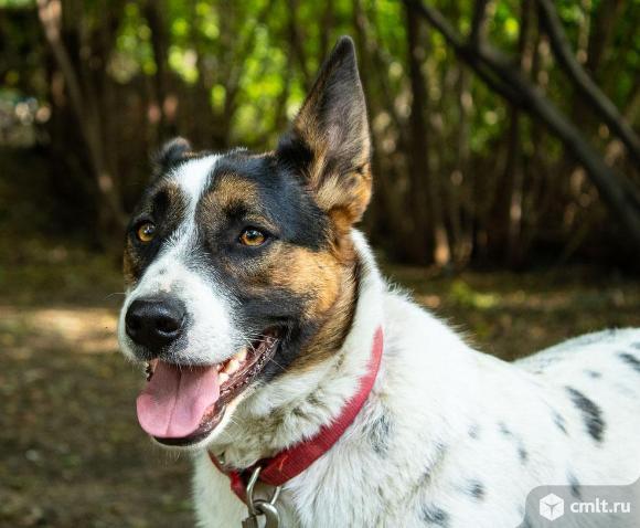 Варя - собака которая сделает вас счастливым!. Фото 19.