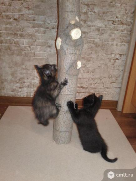 Котята в ответственные руки. Фото 1.