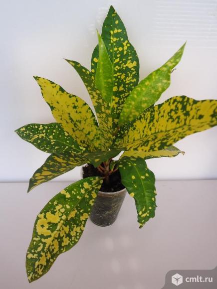 Комнатные растения, 10 видов.. Фото 1.
