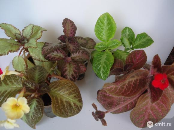 Комнатные растения, 10 видов.. Фото 10.