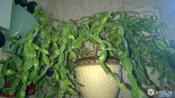 Комнатные растения в горшках цена за все. Фото 1.
