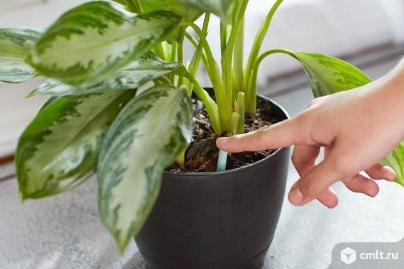 Уход за комнатными растениями. Фото 1.
