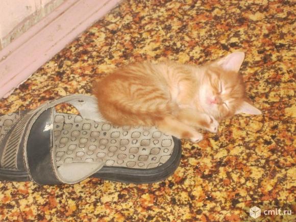 Домашние  котята. Фото 1.