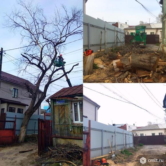 Спиливание деревьев в Воронеже. Фото 1.