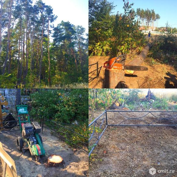 Спиливание деревьев в Воронеже. Фото 8.