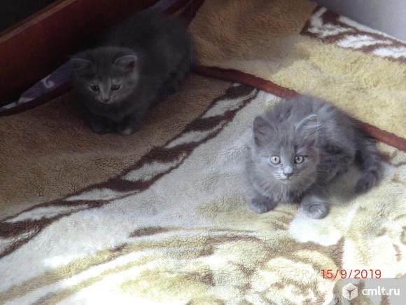 Котики серые. Фото 1.