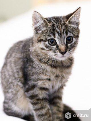 Котята в добрые руки.. Фото 1.