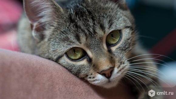 Котята в добрые руки.. Фото 2.