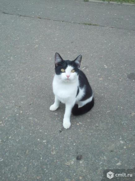 Кошечка Лизонька в добрые руки. Фото 1.
