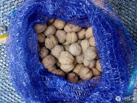 Грецкий орех. Фото 2.