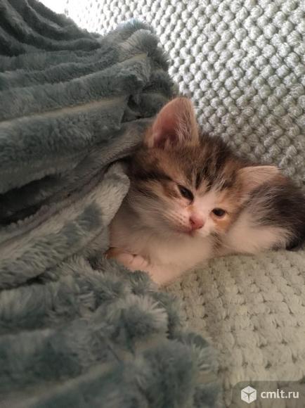 Продается котенок. Фото 1.
