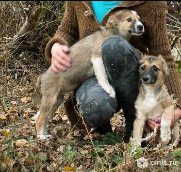 Два маленьких щеночка ищут дом и семью!. Фото 5.