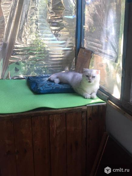 Котик ждет даму своего сердца. Фото 1.