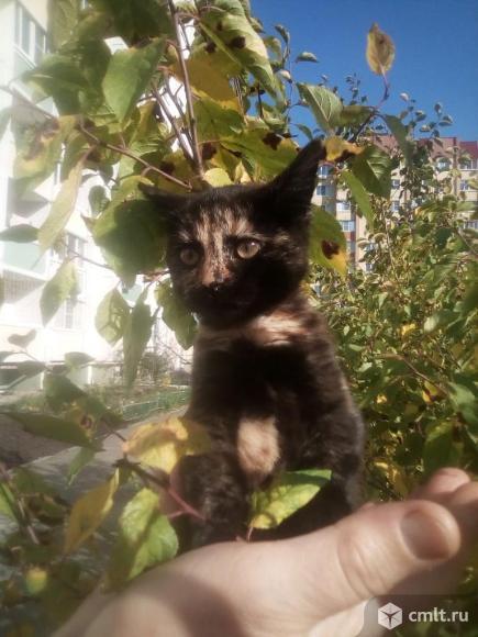 Кошечка Ева в добрые руки. Фото 1.