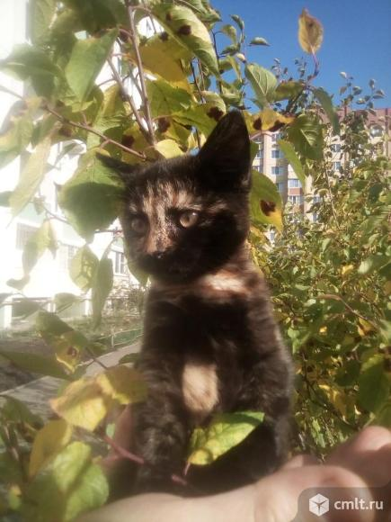Кошечка Ева в добрые руки. Фото 2.