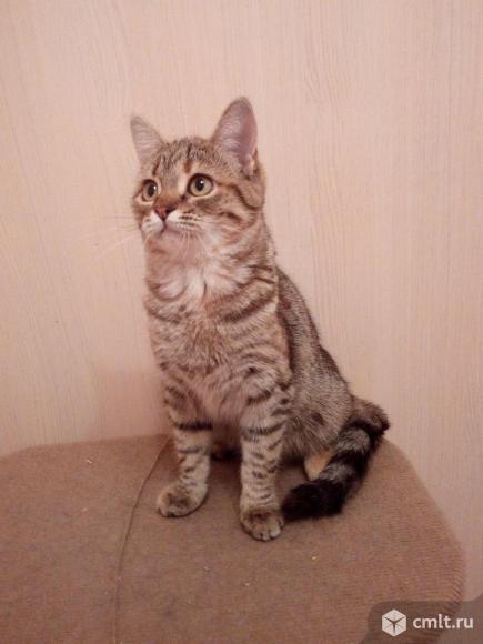 Кошка по имени Мышка ищет дом. Фото 1.