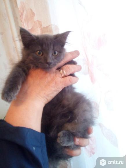 Кошечка Дымка в добрые руки. Фото 1.