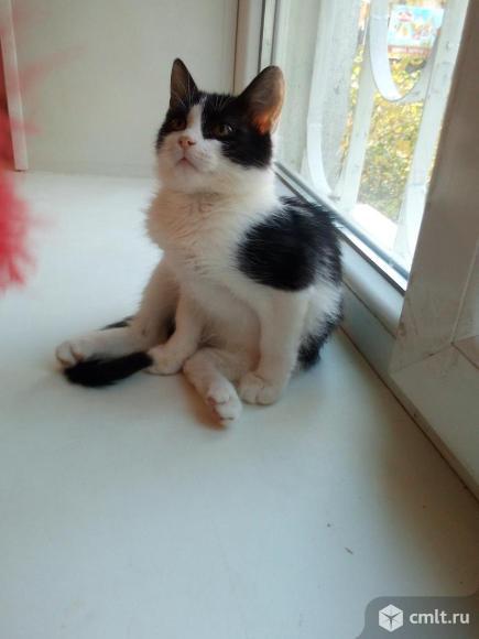 Кошечка Сима в добрые руки. Фото 1.