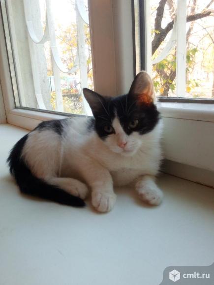 Кошечка Сима в добрые руки. Фото 2.