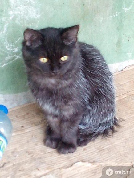 Котик по имени Пушок ищет дом. Фото 1.