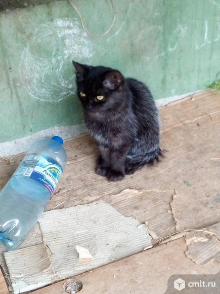 Котик по имени Пушок ищет дом. Фото 3.