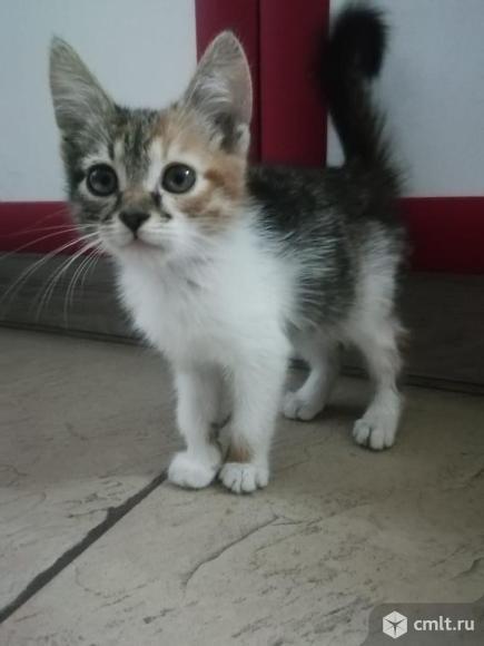 Кошки. Фото 1.