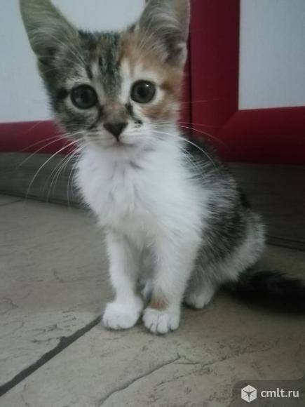 Кошки. Фото 7.