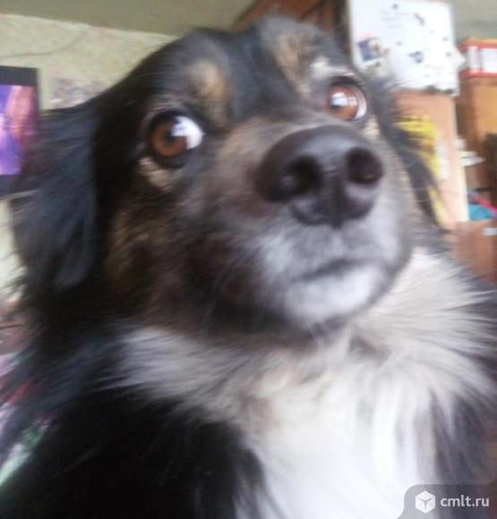 Милый пёсик Мусик ищет хозяина. Фото 1.
