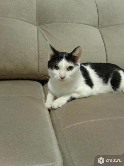 Кошка Ника в добрые руки. Фото 1.