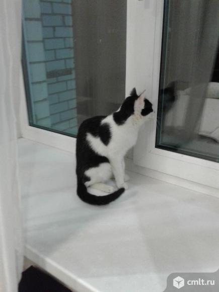 Кошка Ника в добрые руки. Фото 6.
