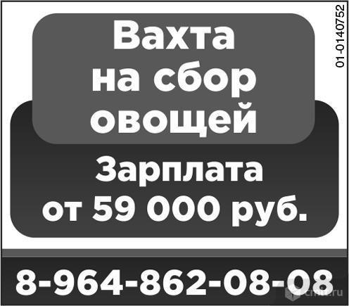 Вахта На Сбор Овощей.