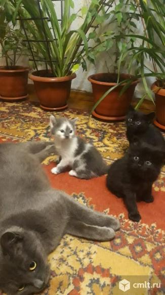 Отдам в хорошие руки милых котят. Фото 1.
