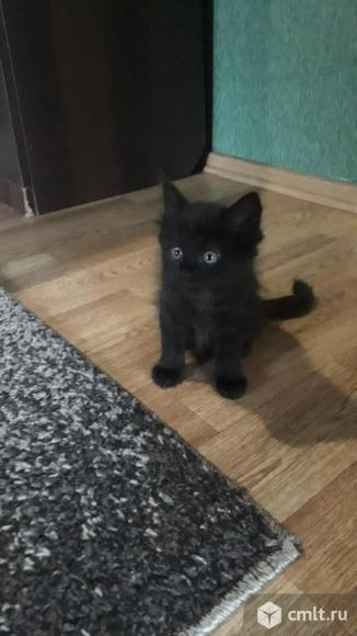 Отдам в хорошие руки милых котят. Фото 4.
