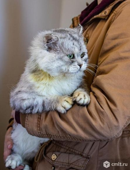 Шикарный кот Семен!. Фото 6.