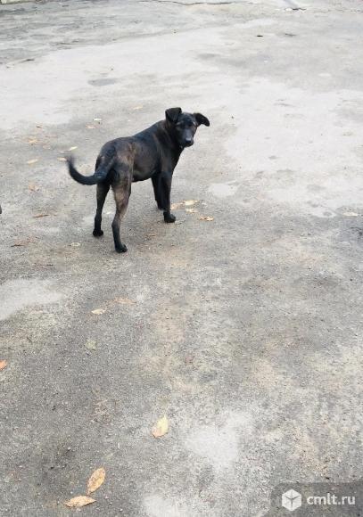Подрощенный щенок. Фото 4.