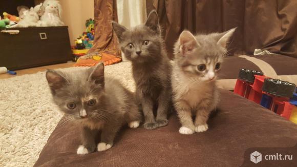 Отдам котят в хорошие и добрые руки. Фото 1.