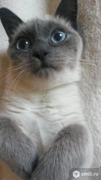 Котенок-девочка Таечка в добрые руки. Фото 1.