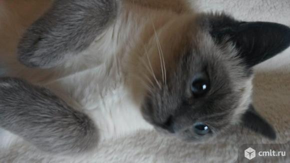 Котенок-девочка Таечка в добрые руки. Фото 3.