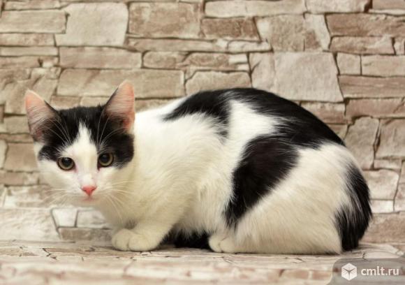 Кошка черно-белого цвета. Фото 1.