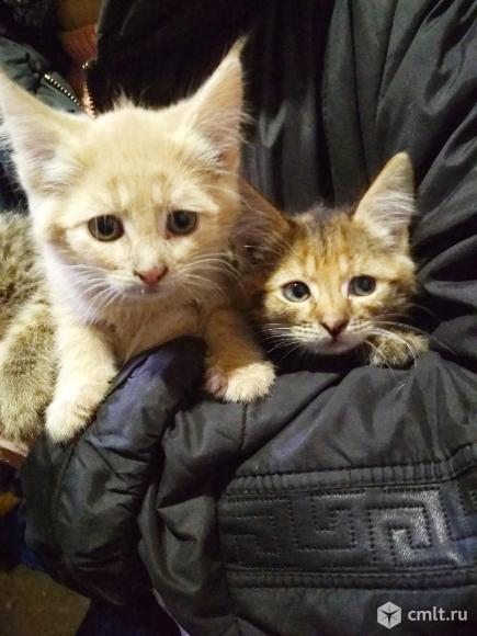 Очаровательные котята. Фото 6.