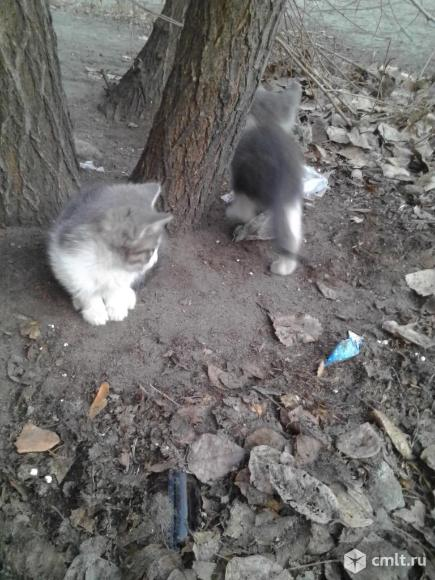 Маленькие котята. Фото 1.