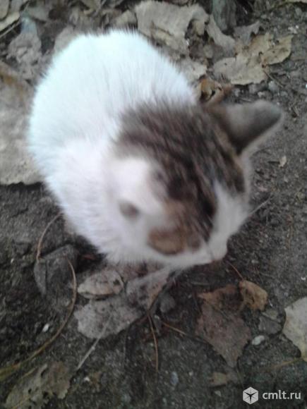 Маленькие котята. Фото 10.