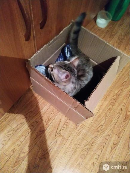 Кошечка ищет дом. Фото 6.