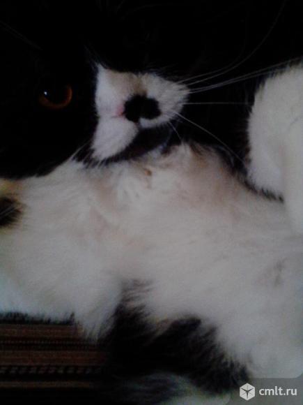 Продам кота. Фото 1.