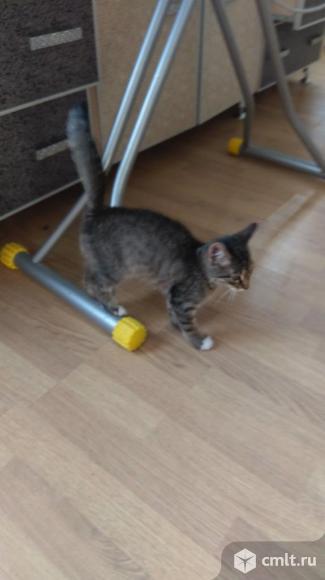 Котик дворянин ищет дом. Фото 3.