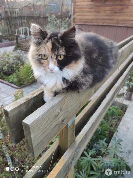 Котята в дар. Фото 4.