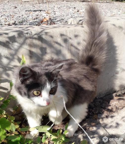 Котенок нельсон в добрые руки. Фото 1.